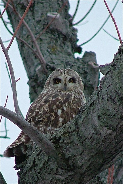Winter Birding in Haldimand County