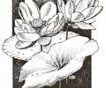 December 2016 Lotus