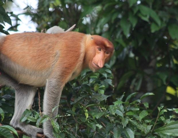 Borneo: A Travel Journal