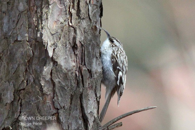 Christmas Bird.Woodhouse Christmas Bird Count Report Norfolk Field