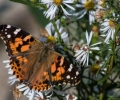 2019 Long Point Butterfly Count Results